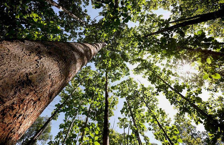 Datos sobre las principales maderas de Costa Rica
