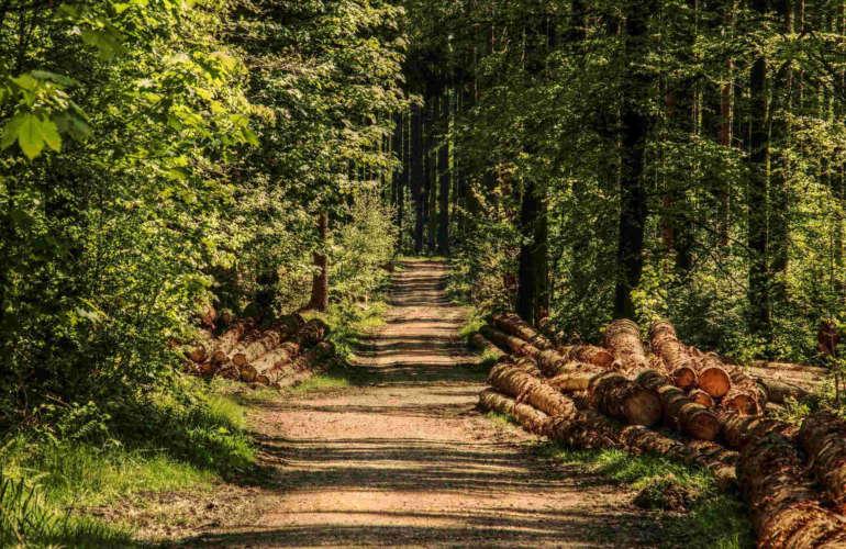 ¿Es la madera teca cotizada en Costa Rica?