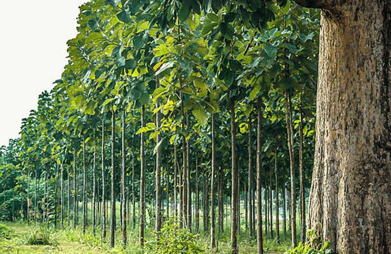 Aporte de la venta de madera a la economía de Costa Rica
